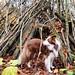 Dasja ne coole Hundehütte. Haben Indianer eigentlich auch Hunde?