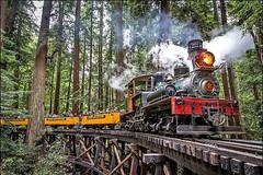USA, la Californie, le train vapeur entre les séquoias