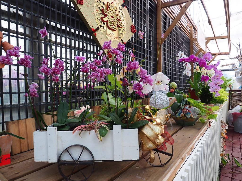 山上蘭科植物園 (8)