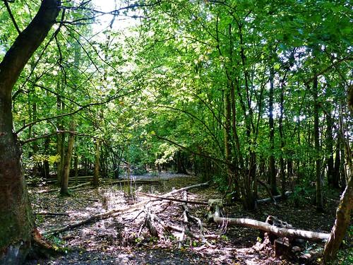 Ename 05 - Van dorp tot bos