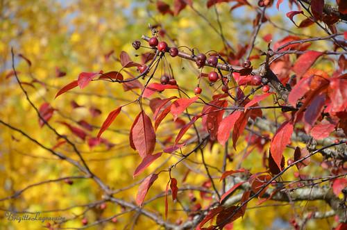 Rouge et or de novembre
