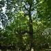 Notton Wood Nature Reserve (112)