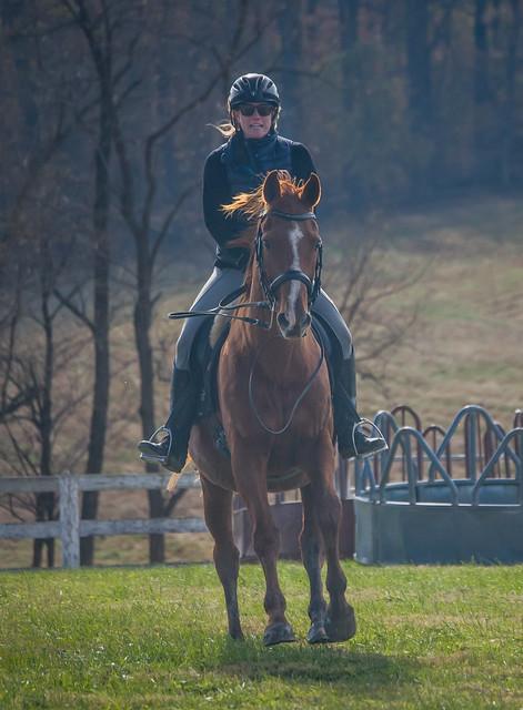 20181116 Austen's Ponies_36