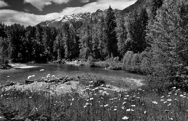 A River Flows Through a Forest and Mountains...and by Some Daisies (Black & White, North Cascades National Park Service Complex)