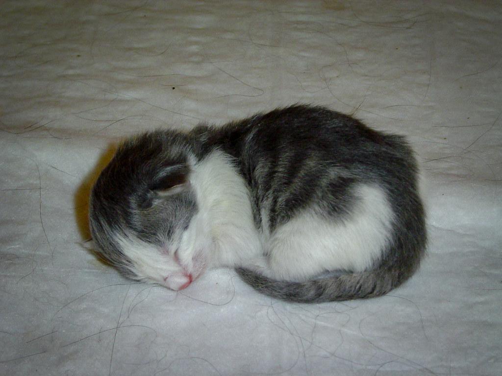 Fotos de animales de todo tipo incluyendo mascotas que más te gustan - Página 13 46314876971_38cc640828_b