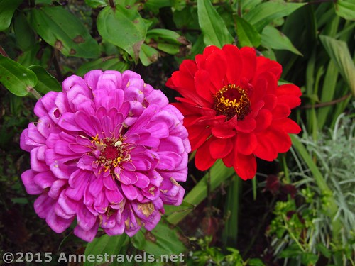 Willowwood Flowers 2