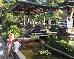 The twins do the morning fish feeding at our hotel in Pedang Bay in Bali this morning