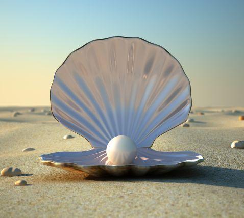 beach-clam-pearl