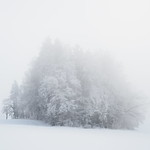 So, 22.01.17 - 15:43 - Fog, Nebel, Winter, monochrome, high key, Wald, forest, woods, trees, Bäume, Schnee, snow