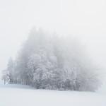 So, 22.01.17 - 15:43 - Fog, Nebel, Winter, monochrome, high key, Wald, forest, woods, trees, Bäume, Schnee, snow