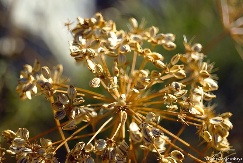 Сухое растение