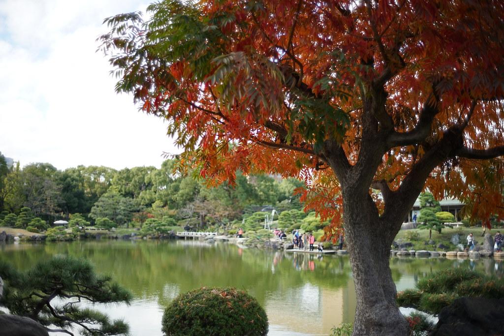 清澄庭園_紅葉