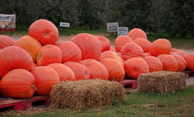 Pick a Perfect Pumpkin