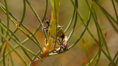 Bugs making more bugs