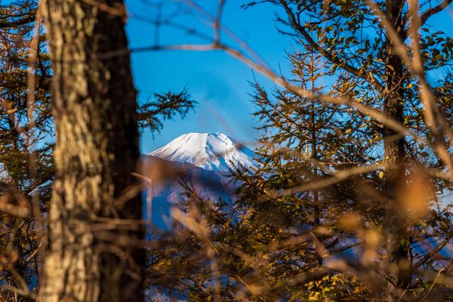 木々間から富士山!