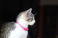 2010 12 24 Kittens (3)