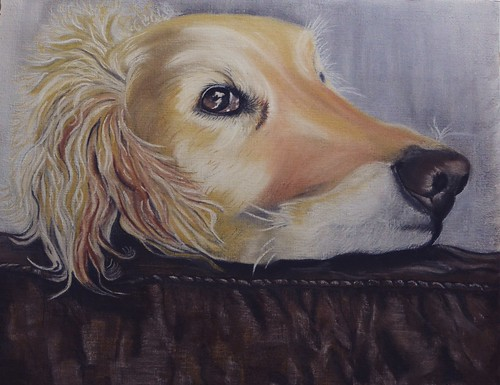 Head resting Alfie  Pastel on oil paper I had intended on doing him in oils but for some reason I used pastels,it's been such a long time since I used pastel.
