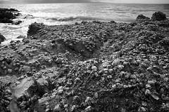 Whakatete Bay 17