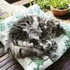 It's a cats life #iwanttobeacat #snoozeallday #catsofinstagram #dontworryaboutathing #alwaysfindthecomfyspots Image description: a longhaired grey cat curled up catnapping eyes half open on a cushion on a table in a garden