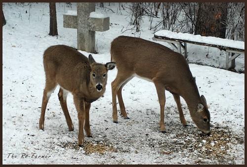 2018-12.deer.duo.1
