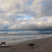 Irvine Beach wide