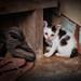 Bangkok – Baby cat