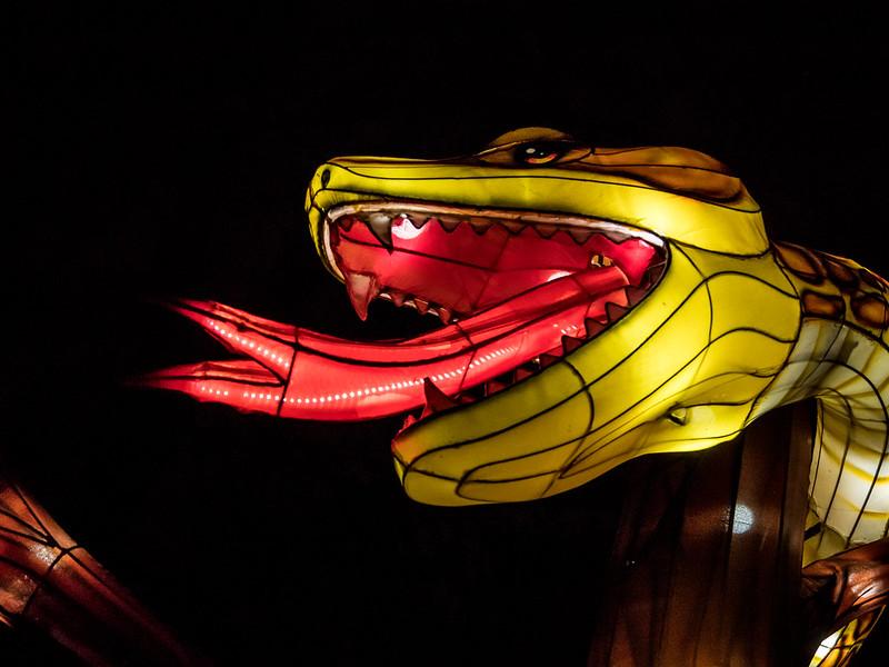 Espèces en voie d'illumination : Le crocodile et le boa 46234404031_53866bdb8a_c