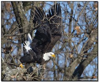 Eagle Blast off Right