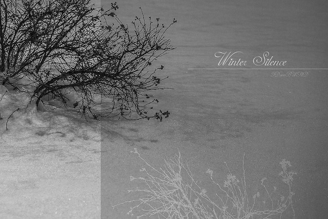 2018.12.07_341/365 - Winter Silence