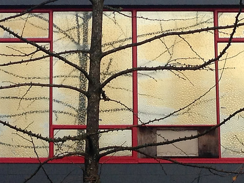 Window with condensation reflecting branches of gold