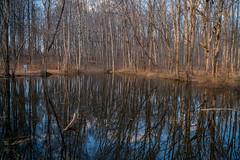 Placid Hidden Pond