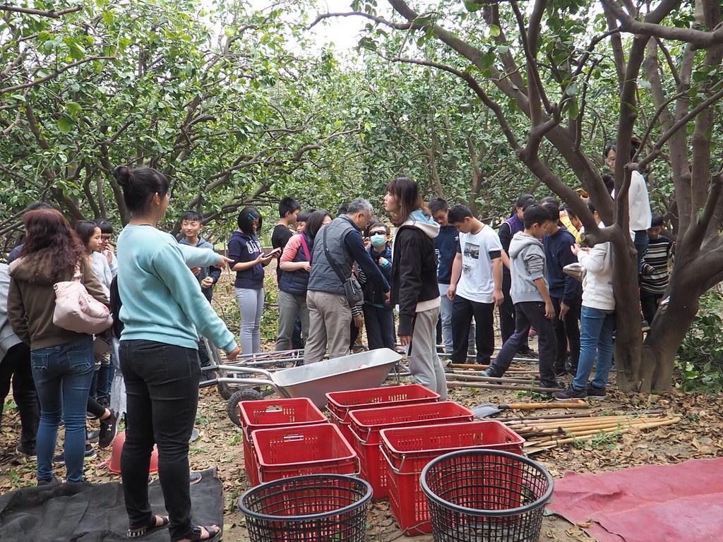 麻豆食農教育 (9)
