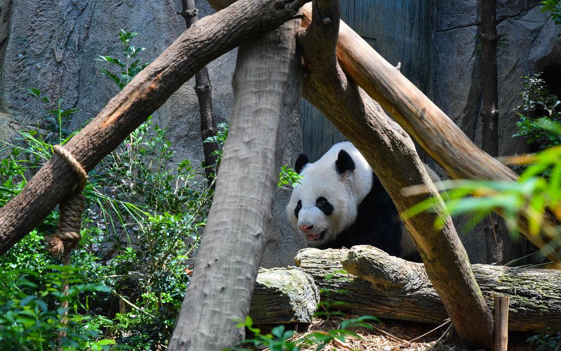 Singapore-zoo-(12)