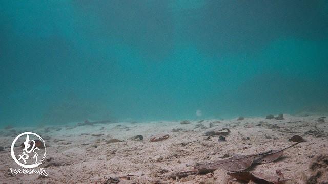 水底はこんな感じ。ドロ。