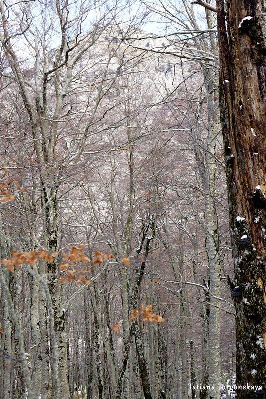 Буковый лес по дороге к вершине Одиево