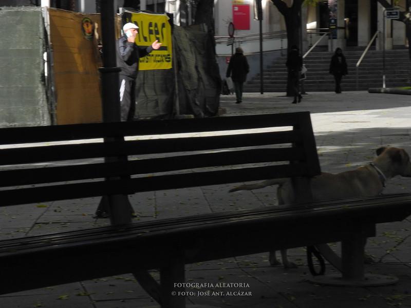fotografía de calle en las que se ve en primer plano un banco con un perro, y varias personas de fondo
