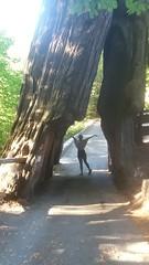 Shrine.Drive.Thru.Tree.NessaH