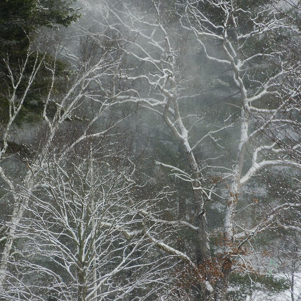 Blustery Tree Snow