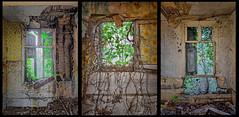 Triptyque, fenêtres sur jardin. - Photo of Lamotte-Warfusée