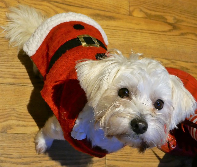 Canine Santa, Panasonic DMC-TZ100