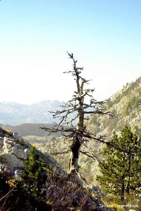 Сухое дерево на склоне горы