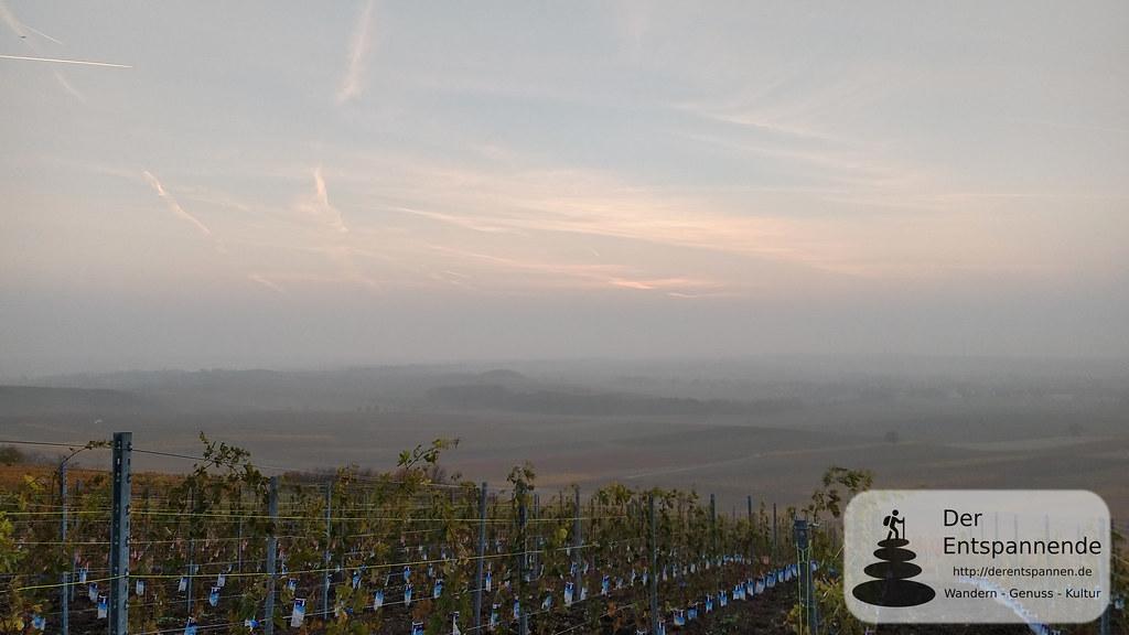 Neuer Weinberg vom Weingut Klostermühlenhof an der Selzstellung