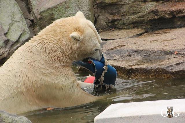 Besuch Zoo Berlin 11.11.20188