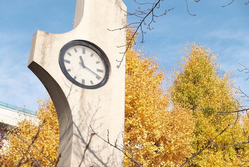 荒川公園の黄葉・紅葉