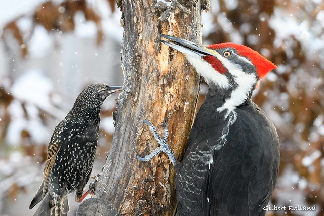 Tolérance Boréale - Sharing food during the cold