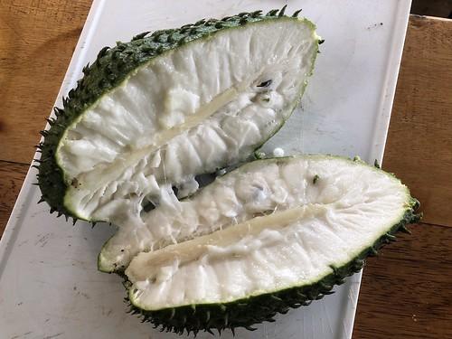 tropicalfruit ecuador amazonas permatree fruit soursop guanabana stachelannone giantsoursopannonamuricata amazonia