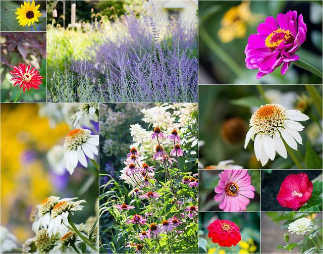 Jill's Flowers