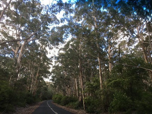 Caves Road, South of Margaret River