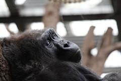 2013 02 09 London Zoo (19)