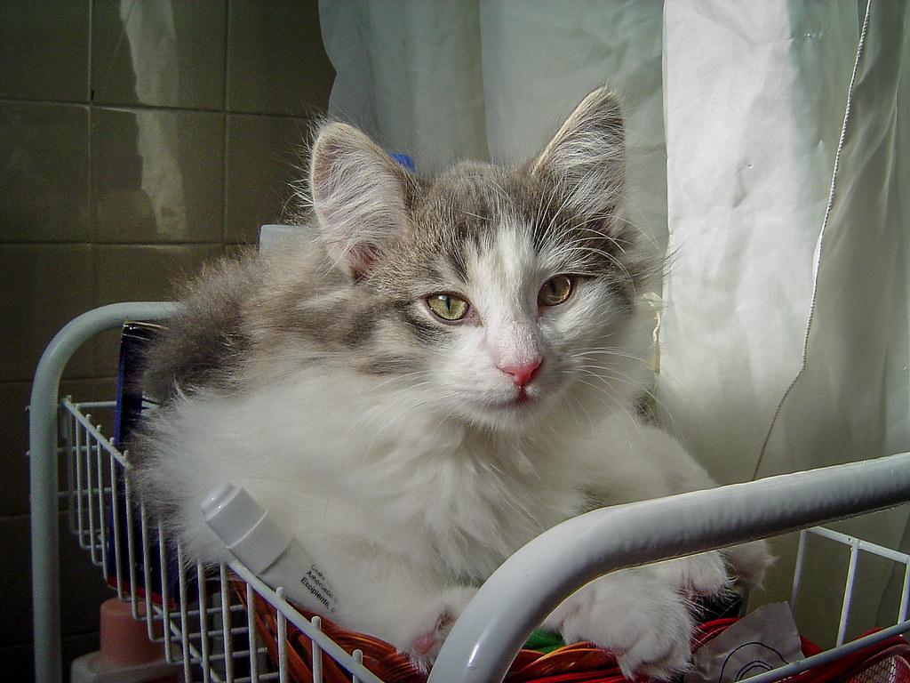 Fotos de animales de todo tipo incluyendo mascotas que más te gustan - Página 13 44498324180_61fac7f8d2_b